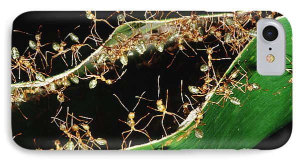 Green Tree Ants IPhone Case by B. G. Thomson