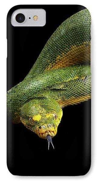Green Tree Python. Morelia Viridis. Isolated Black Background IPhone 7 Case