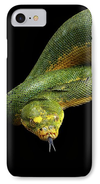 Green Tree Python. Morelia Viridis. Isolated Black Background IPhone Case by Sergey Taran