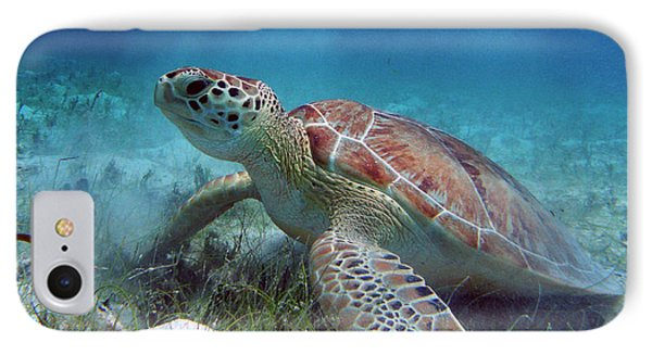 Green Turtle Phone Case by Kimberly Mohlenhoff