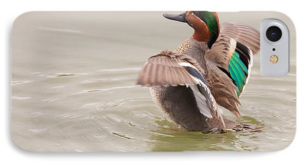 IPhone Case featuring the photograph Green-winged Teal by Ram Vasudev