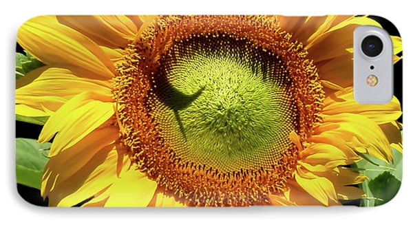 Greenburst Sunflower IPhone Case by Rona Black
