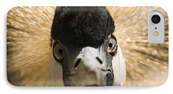 Grey Crowned Crane Phone Case by Chad Davis