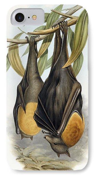 Grey Headed Flying Fox, Pteropus Poliocephalus IPhone 7 Case by John Gould