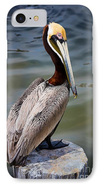 Grey Pelican IPhone 7 Case by Inge Johnsson