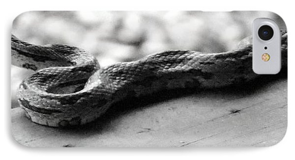 Grey Rat Snake IPhone Case