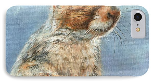 Grey Squirrel IPhone Case by David Stribbling