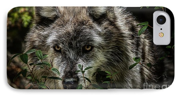 Grey Wolf IPhone Case by Brad Allen Fine Art