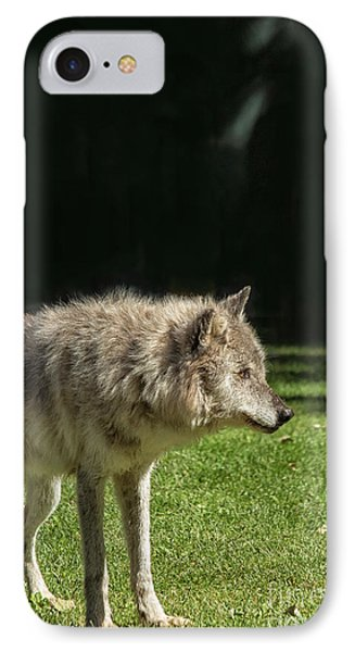 Grey Wolfe In Close Up IPhone Case by Patricia Hofmeester