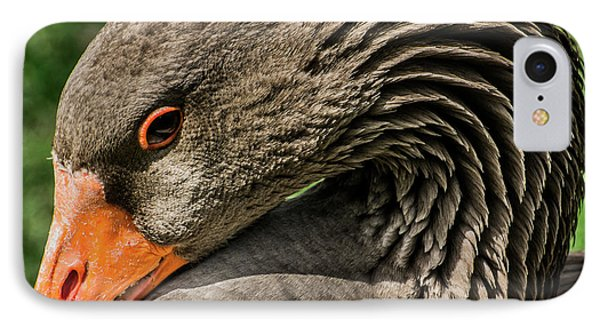 Greylag Goose Portrait  IPhone Case by Gary Whitton