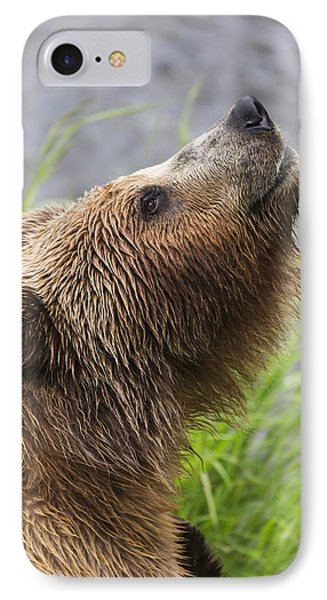 Grizzly Bear Sniffing Air While Fishing IPhone Case by Lucas Payne