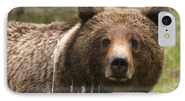 Grizzly Portrait IPhone Case by Steve Stuller