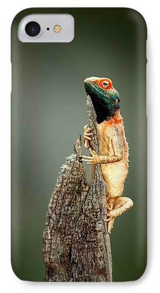 Ground Agama Sunbathing IPhone Case
