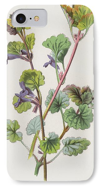 Ground Ivy IPhone Case by Frederick Edward Hulme