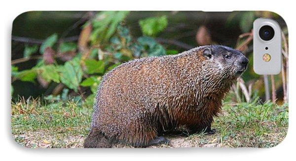 Groundhog  0590 IPhone 7 Case by Jack Schultz