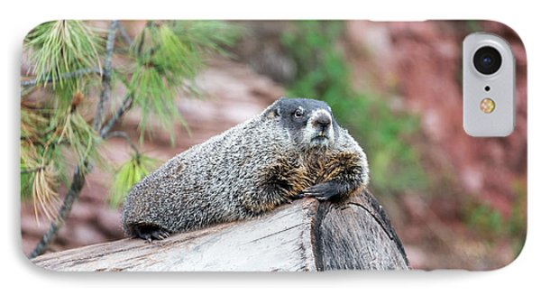 Groundhog On A Log IPhone 7 Case by Jess Kraft