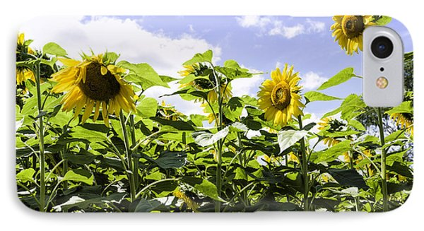 Group Of Sunflowers IPhone Case