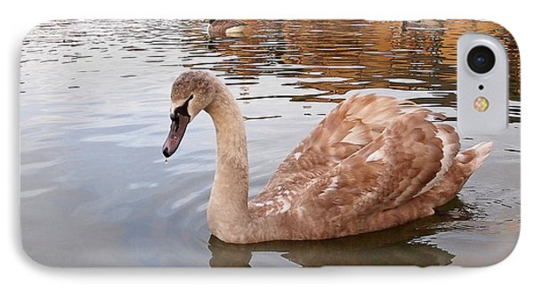 Growing Up On The River - Juvenile Mute Swan IPhone Case by Gill Billington