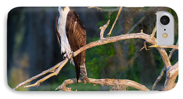 Grumpy Osprey Not Ready For Its Picture IPhone Case by Andres Leon