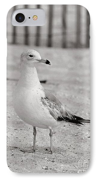Land Sea And Sky Series Gull IPhone Case by Angela Rath