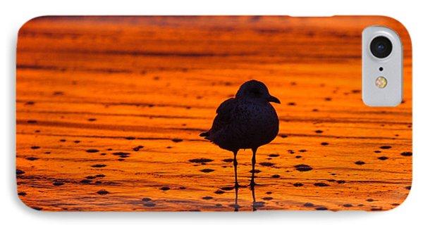 Gull Caught At Sunrise IPhone Case