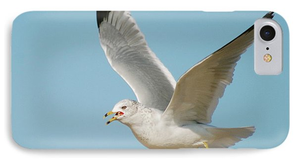 Gull IPhone Case by Michael Peychich