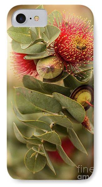 Gum Nuts IPhone 7 Case by Werner Padarin