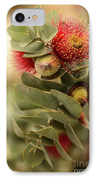 IPhone 7 Case featuring the photograph Gum Nuts by Werner Padarin