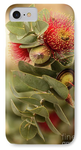 IPhone Case featuring the photograph Gum Nuts by Werner Padarin
