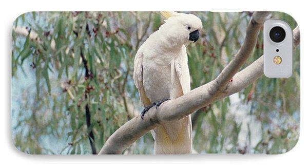 Hamilton Island Cockatoo IPhone Case by Vicki Ferrari