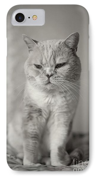 IPhone Case featuring the photograph Handsome Cat by Aiolos Greek Collections