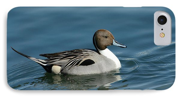 IPhone Case featuring the photograph Handsome Drake by Fraida Gutovich
