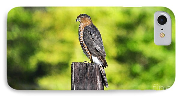 IPhone Case featuring the photograph Handsome Hawk by Al Powell Photography USA