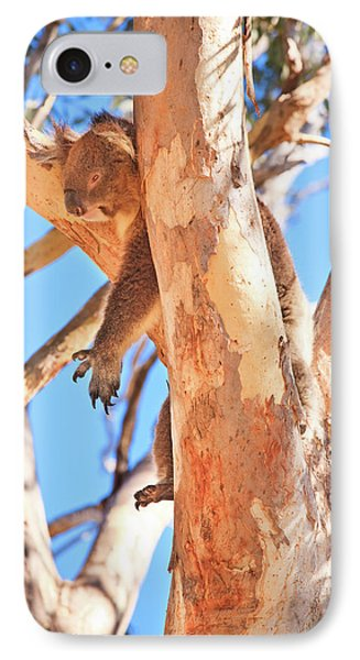 Hanging Around, Yanchep National Park IPhone Case by Dave Catley