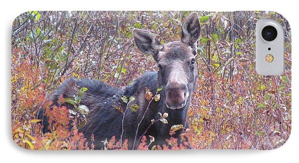 Happy Moose IPhone Case by Elizabeth Dow