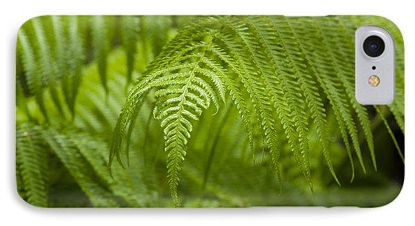Hapu'u Tree Ferns IPhone Case by Charmian Vistaunet