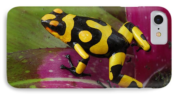 Harlequin Poison Dart Frog  Phone Case by Thomas Marent