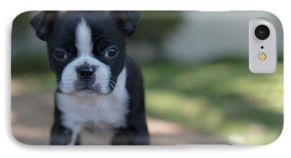Harley As A Puppy IPhone Case by Lora Lee Chapman