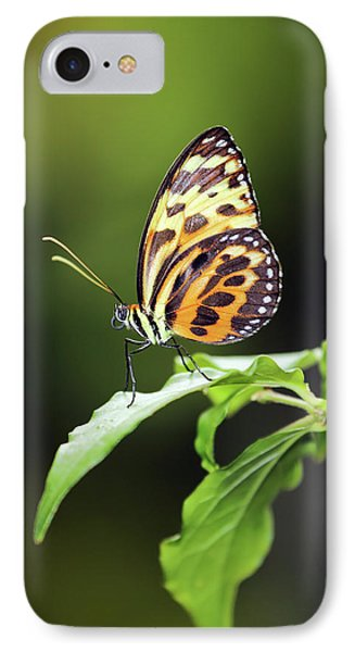 IPhone Case featuring the photograph Harmonia Tiger Wing by Grant Glendinning