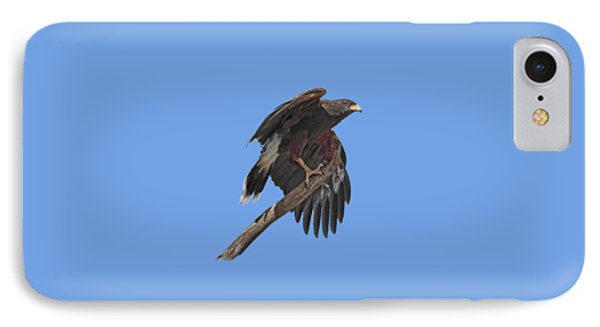 Harris Hawk - Transparent IPhone Case by Nikolyn McDonald