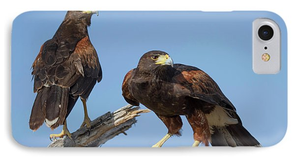 IPhone Case featuring the photograph Harris Hawks by Elvira Butler