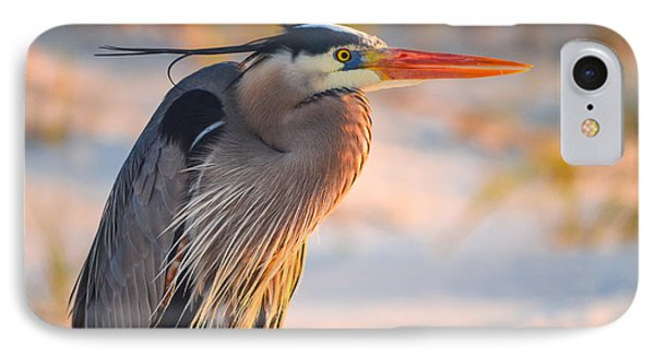 Harry The Heron With Plumage Close-up IPhone Case by Jeff at JSJ Photography