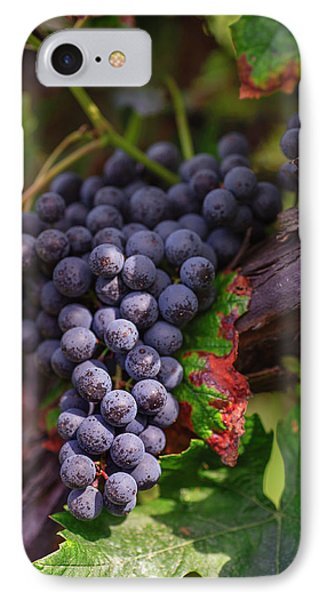 Harvest Time In Palava Vineyards IPhone Case by Jenny Rainbow