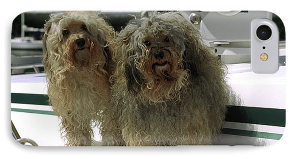 IPhone Case featuring the photograph Havanese Dogs by Sally Weigand
