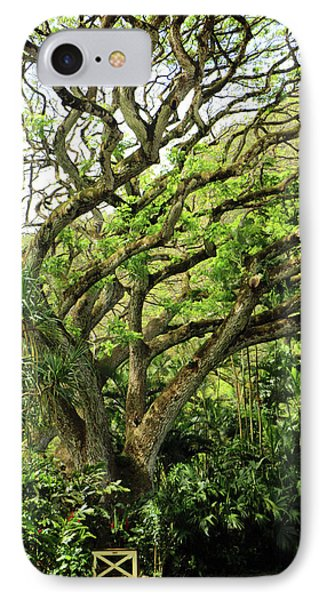 Hawaii Tree-bard IPhone Case