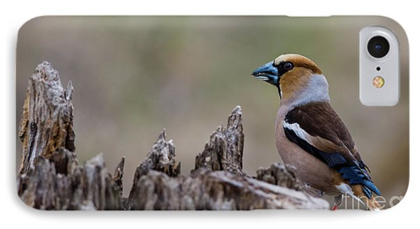 Hawfinch Perching IPhone Case by Torbjorn Swenelius