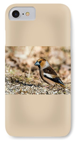 IPhone Case featuring the photograph Hawfinch's Gaze by Torbjorn Swenelius