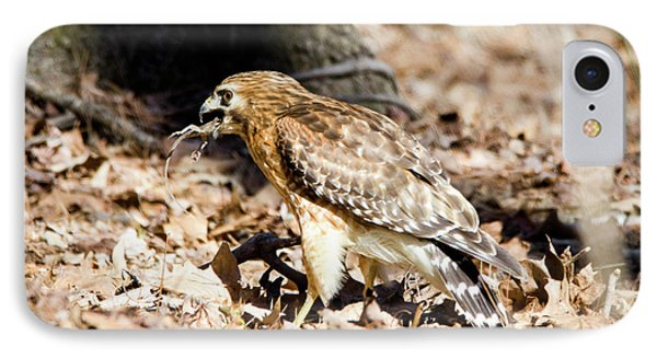 IPhone Case featuring the photograph Hawk And Gecko by George Randy Bass