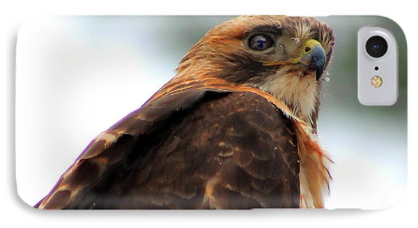 IPhone Case featuring the photograph Hawk by Bruce Patrick Smith