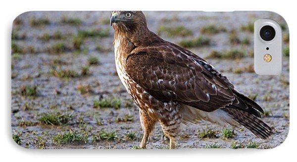 Hawk On A Walk Phone Case by Randall Ingalls